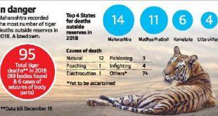 95 tiger deaths