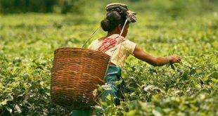 Tea Association announces